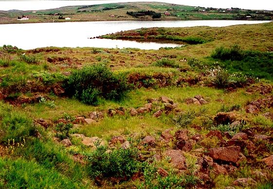 Þingnes