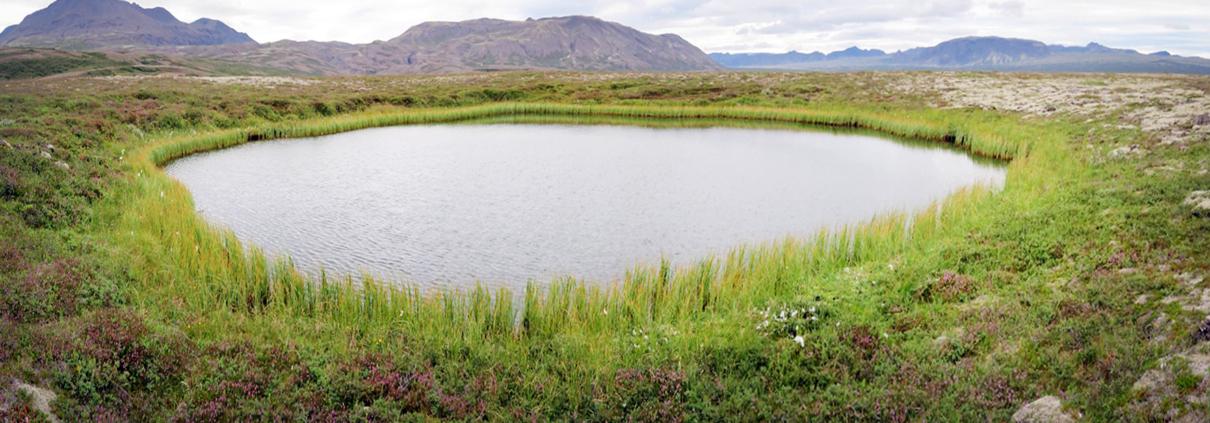 Þingvallahraun